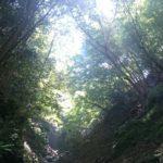 西丹沢ビジターセンター~檜洞丸日帰り登山